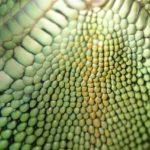Agama brodata terrarium . Jak zaaranżować terrarium dla jaszczurki