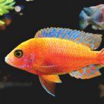 Hodowla ryb akwariowych – Led do akwarium?