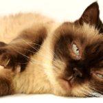 Jak przebiega leczenie FLUTD? Syndrom urologiczny kotów leczenie