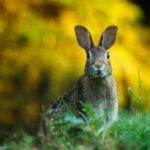 Twój mały króliczek – jakie są rasy królików miniaturek? Hodowla królików miniaturowych