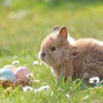 Żywienie królików miniaturek. Co jedzą króliki miniaturki – dieta królika miniaturki