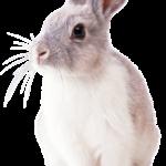 Gdy nasz królik jest chory – katar u królika miniaturki, biegunka u królika miniaturki