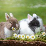 Co jedzą króliki zimą? Żywienie królików
