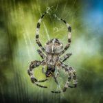 Pająki niejadowite – pająki bez jadu
