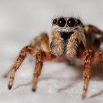 Hodowla pająków. Gdy chcemy kupić pająka