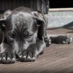 Szybka i skuteczna nauka czystości dla psa –  jak nauczyć psa czystości?