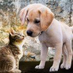 Jak skutecznie oswoić psa z kotem?