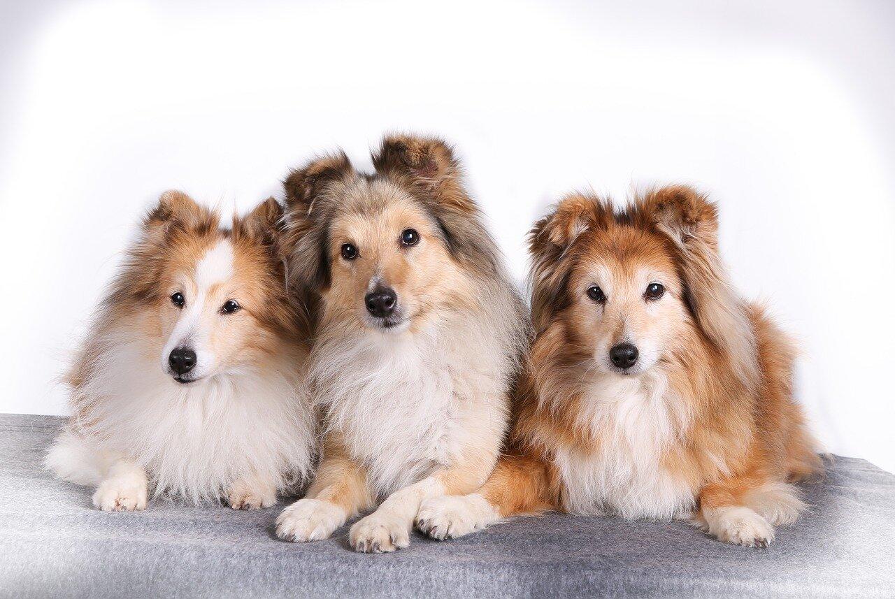 Domowe Sposoby Na Pchły U Psa Przychodnia Zwierzak