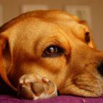 Umiejętne obcinanie pazurów u psa