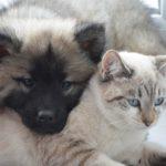 Zakup psa. O czym pamiętać kupując psa lub innego zwierzaka?