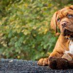 Naturalne gryzaki dla psów – jak wybrać?