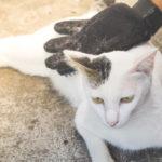Łupież u kota – Objawy, przyczyny, zwalczanie