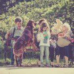 Wszystko, co musisz wiedzieć o posiadaniu zwierząt domowych. Wady i zalety posiadania zwierząt domowych