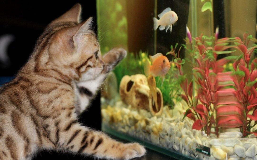 Jak dobrać odpowiednią wielkość akwarium?