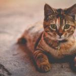 Szelki dla kota – kiedy i jak je zakładać?