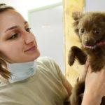 Jak dbać o zdrowie zwierząt domowych?