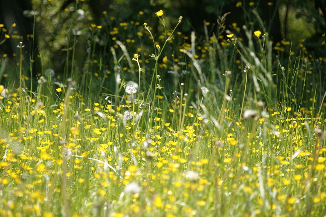 Podpowiadamy jakie zioła stosować na alergię