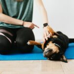Sposób na poprawę chęci psa do pracy człowiekiem – wybierz warsztaty motywacyjne
