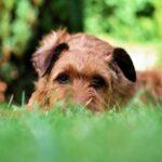 Pies w ogrodzie. Czy można mieć jedno i drugie? Jak chronić rośliny przed zwierzętami?