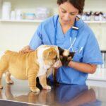 Diagnostyka ortopedyczna u zwierząt domowych