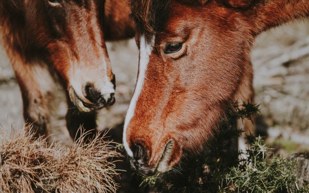 Sieczki – Dlaczego są ważne w diecie konia?