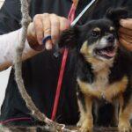 Usługi świadczone przez psiego fryzjera. Kompendium wiedzy