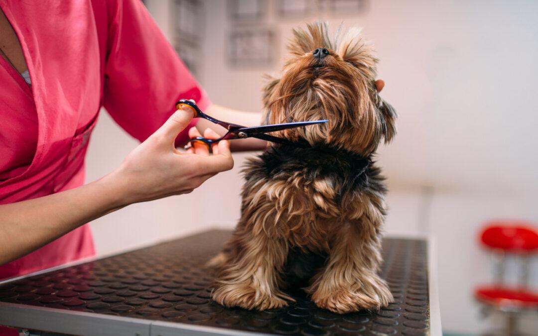 Jak dbać o sierść psa? Co warto wiedzieć?