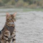 Spacer z kotem i jak się do niego przygotować?