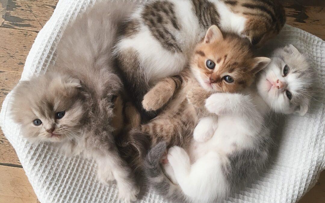 Żwirek dla kota, który się nie roznosi? Czysta kuweta.