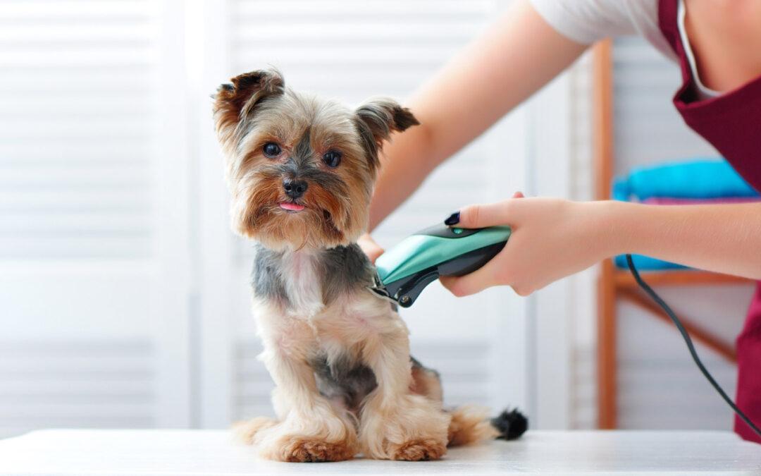 Jak przygotować psa do wizyty u groomera?