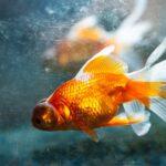 Oświetlenie akwariowe – kilka faktów, które warto znać