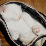 Transporter dla kota – wybierz odpowiedni!