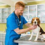 Choroby stawów u psów jakie diagnozuje weterynarz, a dieta