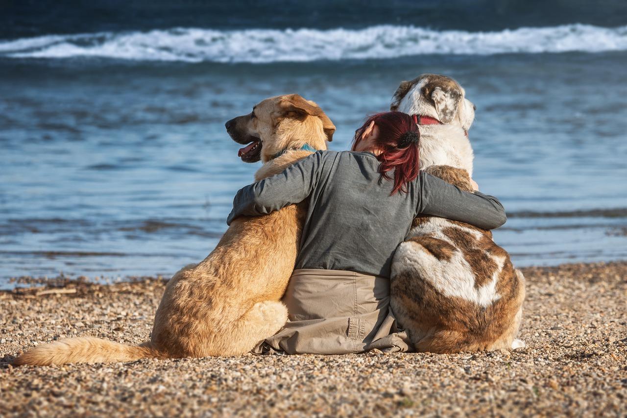 Rasy psów odpowiednie dla dzieci
