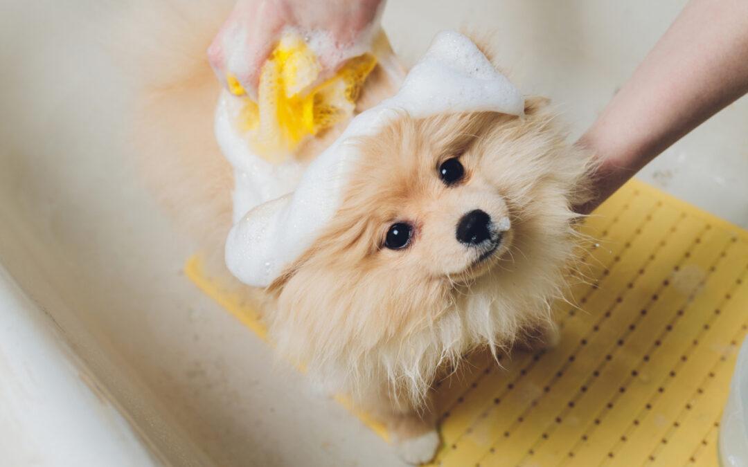 Pies w studiu urody – dlaczego to dobry pomysł?