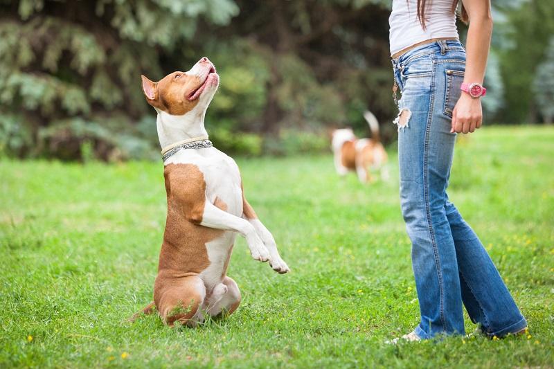 Czym zajmuje się tresura psów i behawiorystyka zwierząt?