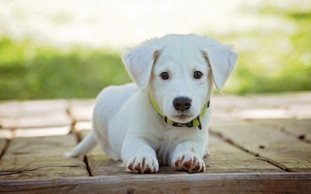 Jak zapewnić psiakowi wszystkie niezbędne do życia potrzeby by wychować grzecznego i szczęśliwego zwierzaka- domownika?