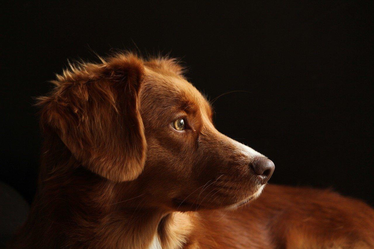 Psie potrzeby – jak o nie zadbać?